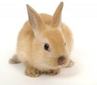 Акция «Загадай желание Кролику»