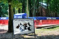 Выставка голубей «Символ мира и любви»