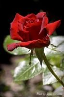 ФОТОКОНКУРС «Цветы любимого парка»