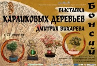 Выставка карликовых деревьев Дмитрия Вихарева «Бонсай»
