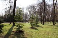 Кедровая сосна пополнила ботаническую коллекцию парка