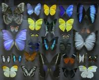Новый выставочный проект!!! Cамые красивые и знаменитые бабочки мира «Порхающие цветы». Демонстрируется впервые в Беларуси!