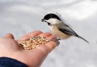 Ежегодная экологическая акция «Встречаем птиц»