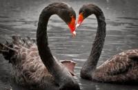 Экологическая акция «Все птицы в гости к нам!», приуроченная к Международному дню птиц
