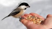 Ежегодная экологическая акция «Угощаем птиц и белок»