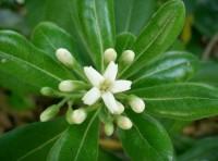 Чудесный аромат весны в Зимнем саду!