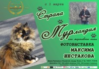 Выставка «Страна Мурландия, или мартовские коты»