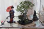 """Выставка """"Сказки Сёгуна Токугавы в интерьере бонсай"""""""
