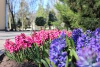 Весна в гомельском парке 2020