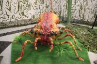 Выставка «Гигантские насекомые»